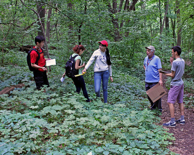 Students from Nazarbayev University in Astana, Kazakhstan, engaged in fieldwork at Muir Woods.